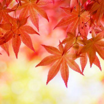 Momiji-gari Fall Colors Viewing 2018: Invitation for Asian Students