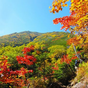 Momiji-gari Fall Colors Viewing 2019: Invitation for Asian Students